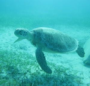 Karibik-MIX-2011-4-e1457970894636
